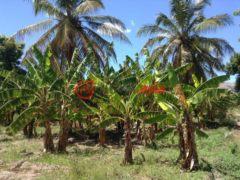 海地阿蒂博尼特的房产