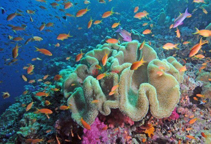 壁纸 海底 海底世界 海洋馆 水族馆 桌面 720_490